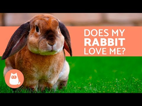 5 Clear Signs that Your Rabbit Loves You!