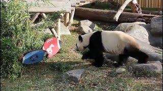 Toronto Zoo panda predicts Grey Cup winner