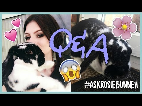 Q&A: Studying Diplomas In Animals & More | AskRosieBunneh