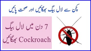 kitchen se Cockroach Bhagany ka totka by zubaida apa 100% effective results