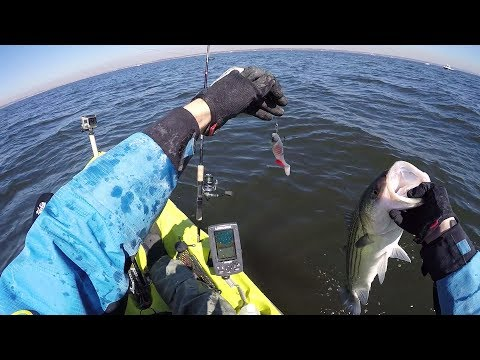 The Striper Bass Grind. Surf and Kayak Fishing the Bay