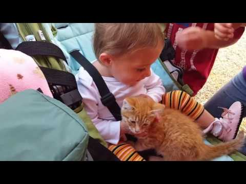 Baby's First Time Holding A Kitten