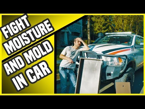 Mold In Car : Camper truck mold, condensation, mold paint!