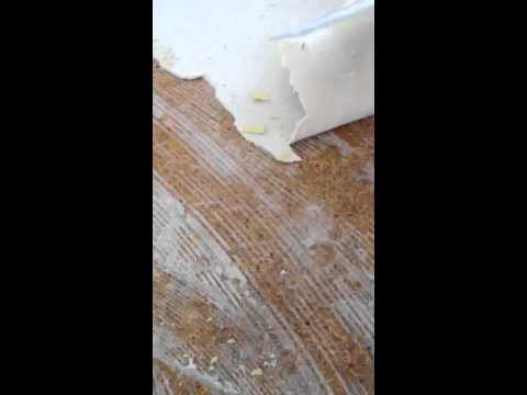 How to remove carpet pad glued on the floor