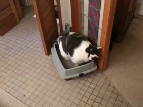 Fat Cat goes on a Diet 3