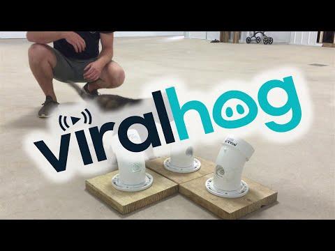 The Cutest Police Dog in Training || ViralHog