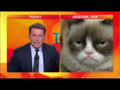 Reporter Loses It During Grumpy Cat Interview