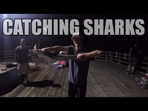 Catching Sharks at Night