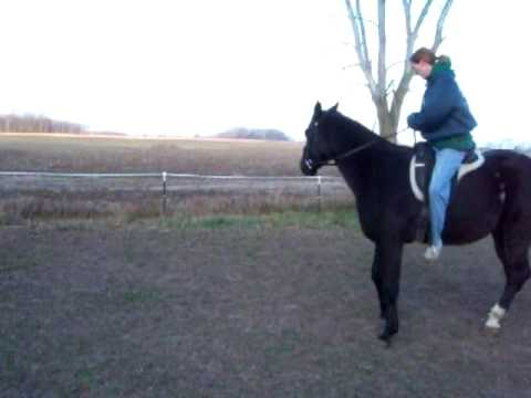 TRAINING my horse to get head down