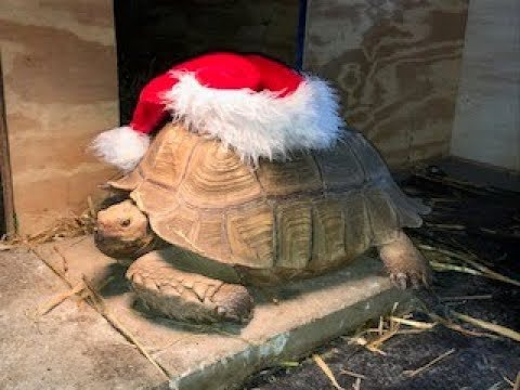 Merry Christmas from the gang at Backyard Tortoise!
