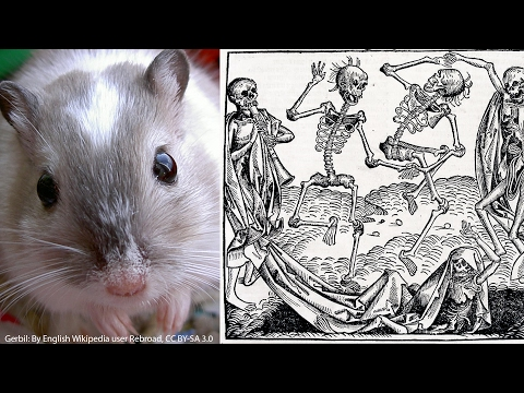 Did rats really cause the Black Death?