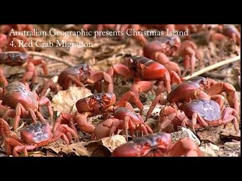 Australian Geographic presents Christmas Island - Part 4: The Red Crab Migration