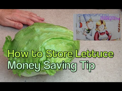 How to store a Lettuce Money Saving Home Hint cheekyricho