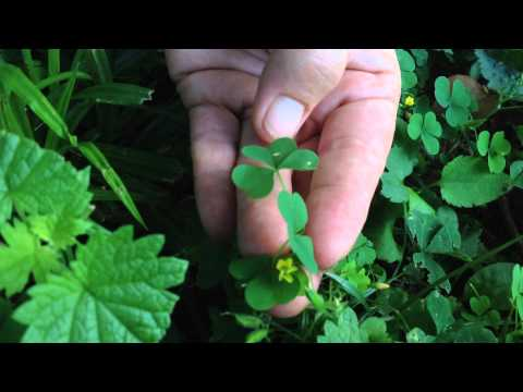 Identifying wild plants in your backyard with Susun Weed
