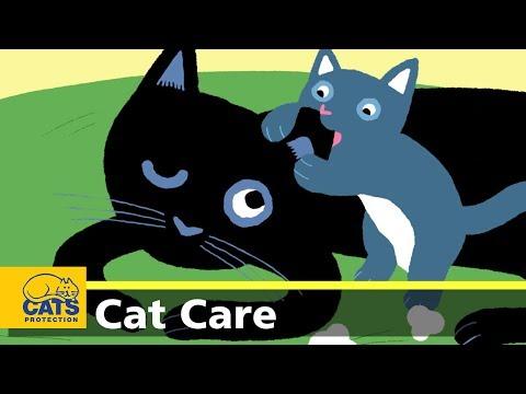 Female cat care: why should I get my cat done?