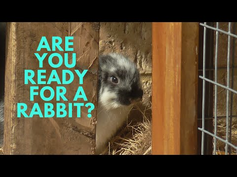 Are You Ready For A Rabbit?