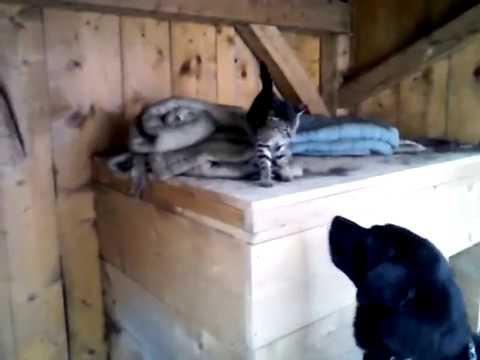 Dog vs Cat (Part 1) - dog barking at cat