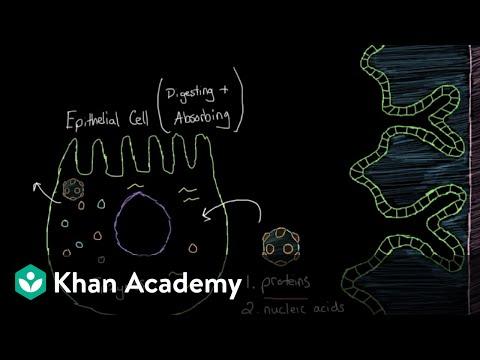 What is viral gastroenteritis? | Gastrointestinal system diseases | NCLEX-RN | Khan Academy