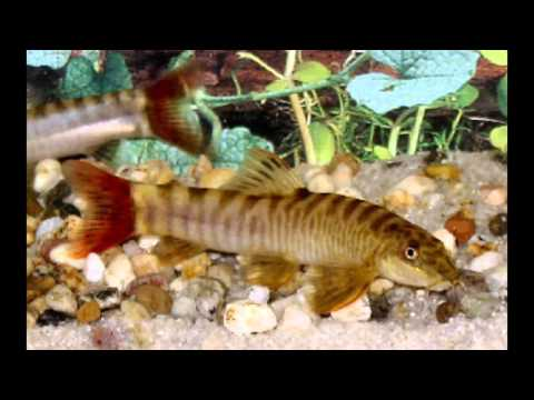 Fish for Cool Water Aquariums