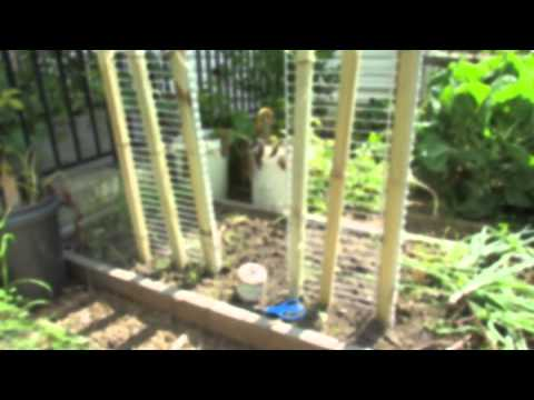 How to Make a 6 foot Cucumber & Vegetable Trellis in 15 Minutes: Grow Vertical! - TRG 2014