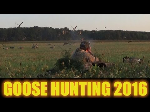 Goose Hunting 2016