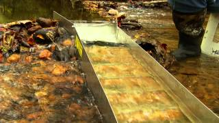 How to Sluice for Gold: Gold Fever Ep164 Clip