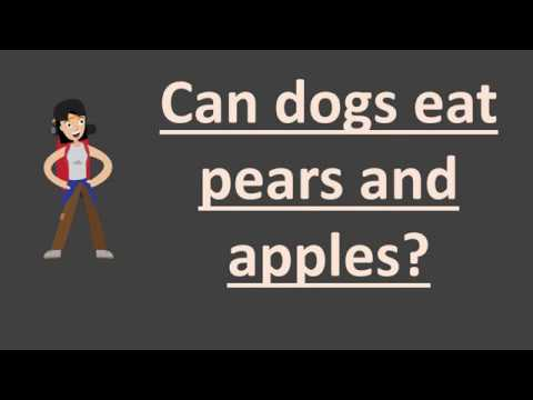 Can dogs eat pears and apples ?