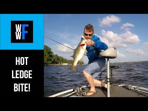 How To Catch Offshore Ledge Fish, Crankbaits and Carolina Rigs for Bass in Florida