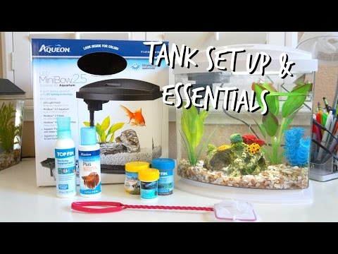 HOW TO SET UP A BETTA FISH TANK | ESSENTIALS