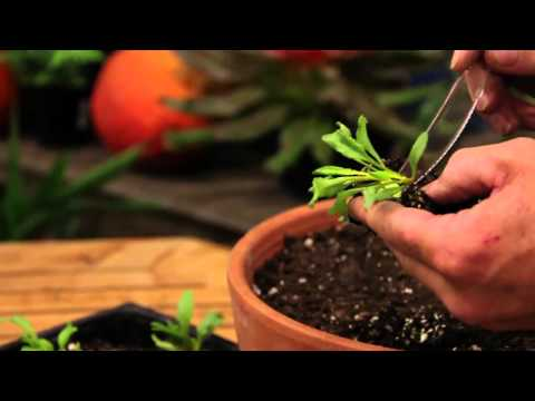 How to Grow and Transplant a Vegetable Seed Indoors