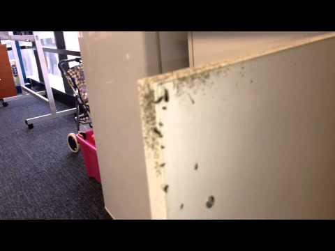 German cockroach problem in kitchen cupboard.