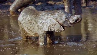 Elephants Empire 🐘- Baby Elephant   Elephant Documentary   Natural History Channel