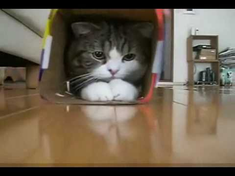 If You Haven't Seen Maru, It's Time You Did!