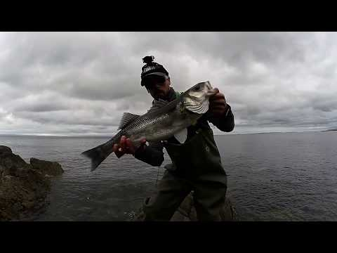 Lure Fishing For Bass UK