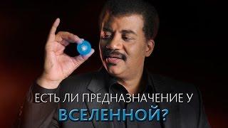 Download Есть ли предназначение у Вселенной? Нил Деграсс Тайсон [MinutePhysics] Video