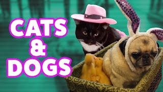 ☺ AFV (NEW!) Funniest Cats & Dogs Bloopers of 2016 (Funny Clips Fail Montage)