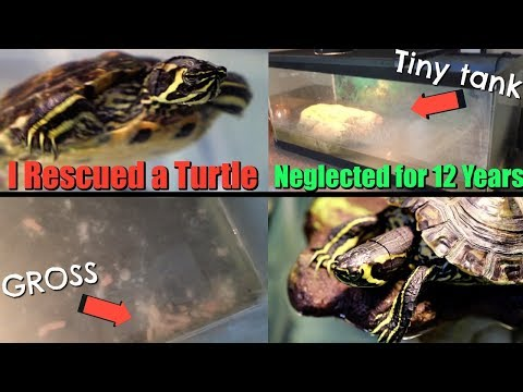 I Rescued a Turtle That was Neglected for Over 12 Years