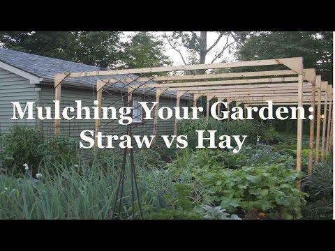 Mulching Your Garden: Straw versus Hay