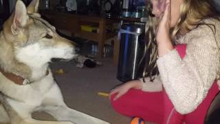 Daughter and CsV Wolfdog playing