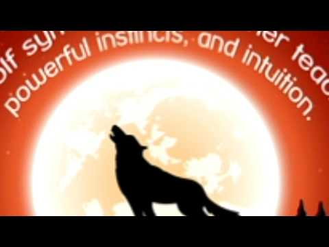 An Insight Into What the Wolf Spirit Animal Symbolize