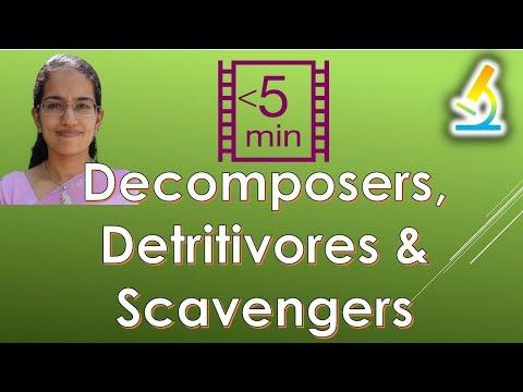Differentiating Decomposers, Detritivores & Scavengers (Ecosystem)