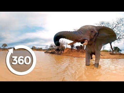 Elephants on the Brink (360 Video)