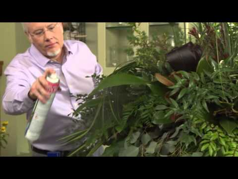How to shine your plants