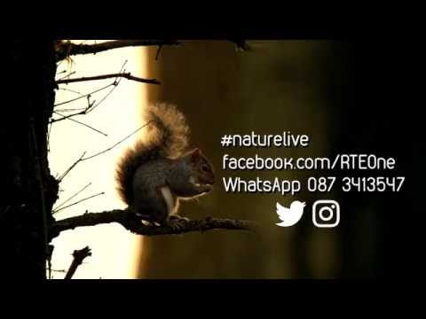 Nature Live Ireland Call Out | Nature Live | RTÉ One