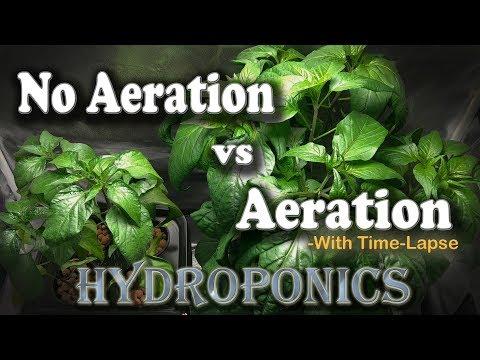 """Aeration vs No Aeration - Hydroponic Peppers w/Time Lapse (Brinno) """"Semi-DWC vs Kratky"""""""