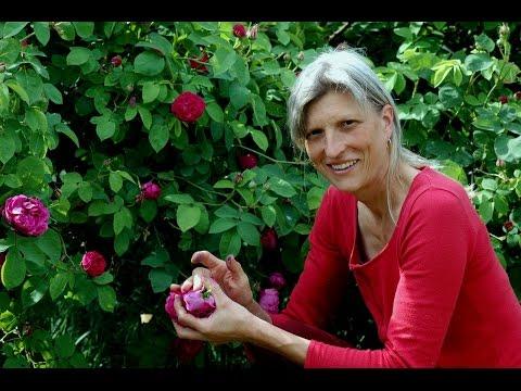 Magliano Rose Petal Jam Preserve