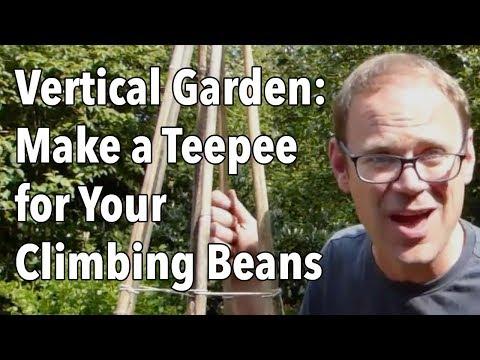 Vertical Garden: Make a Teepee for Your Climbing Beans
