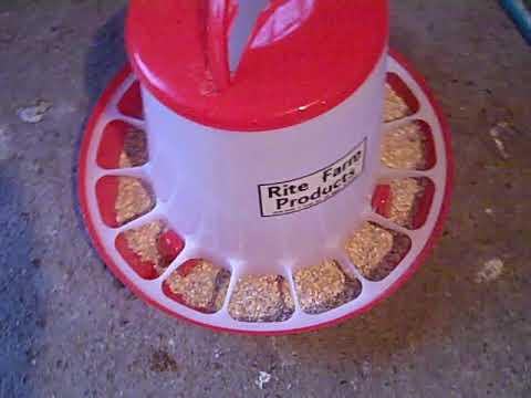 EXTRA LARGE RITE FARM PRODUCTS HD 20 LB CHICKEN FEEDER CUSTOMER REVIEW