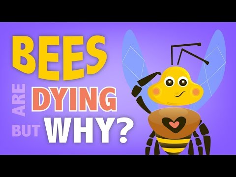 WHY ARE THE BEES DYING? HOW CAN WE HELP THEM? | Explaindom