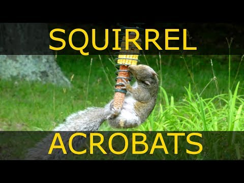The Seldom Seen Squirrel Feeder - Stokes Select Cob Feeder Review